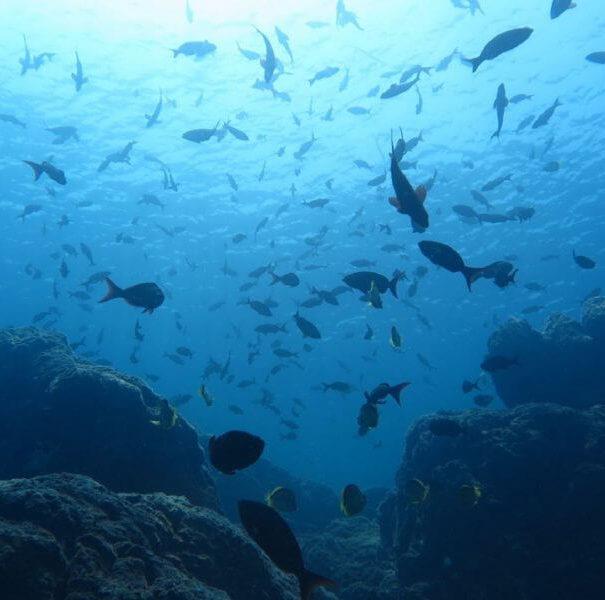 Caño Island Scuba Diving
