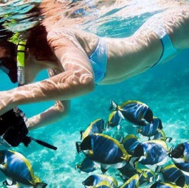 Caño Island Snorkeling