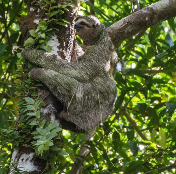 Corcovado National Park Guided Tour