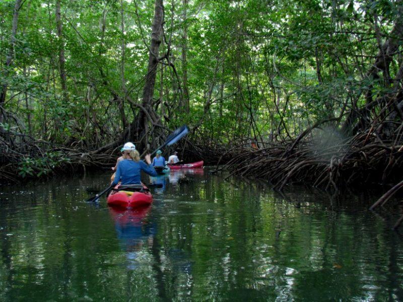 Damas Island Kayak Tours