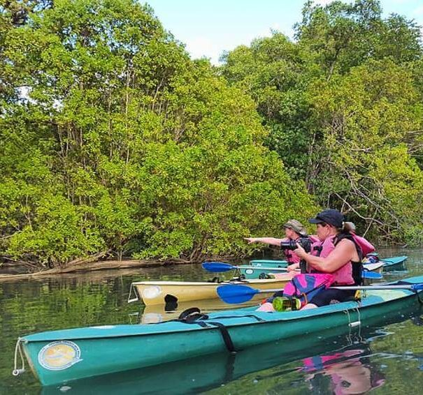 Damas Island Kayak Tours
