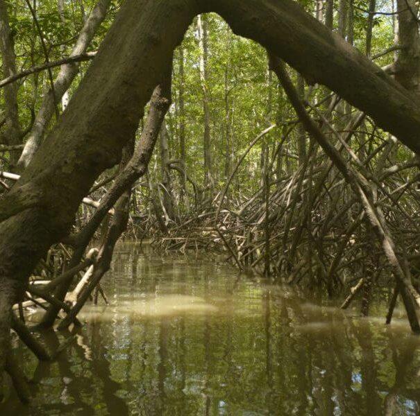 Damas Mangrove Boat Tours