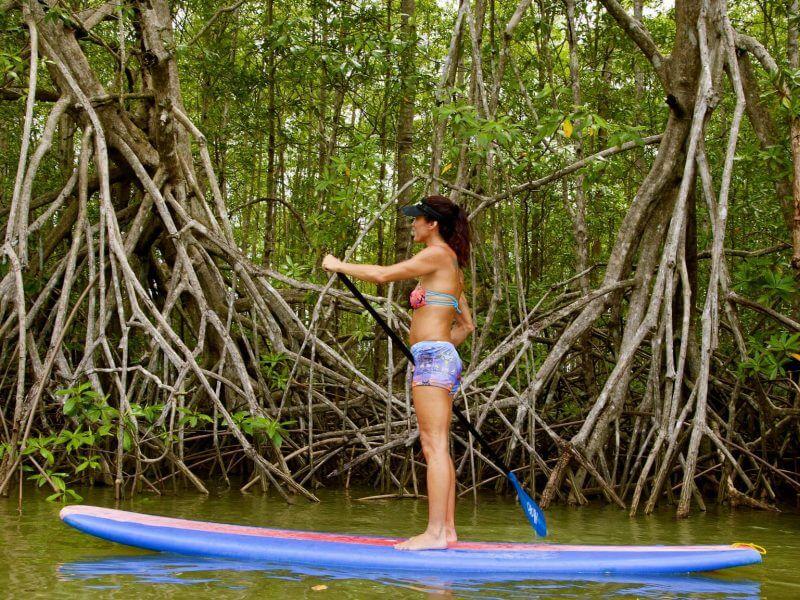 Damas Mangrove Paddle Board