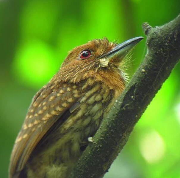 Endemic Bird Expert Guided Tour
