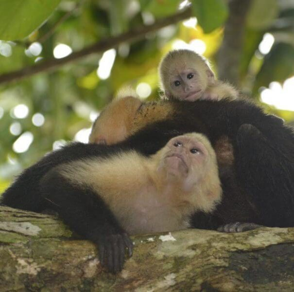 Manuel Antonio Park Guided Tour