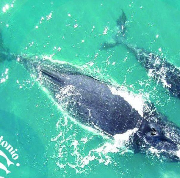 Planet Dolphin Catamaran