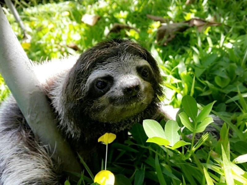 Sloth Sanctuary Insider's tour