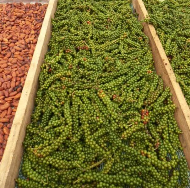Villa Vanilla Spice Farm