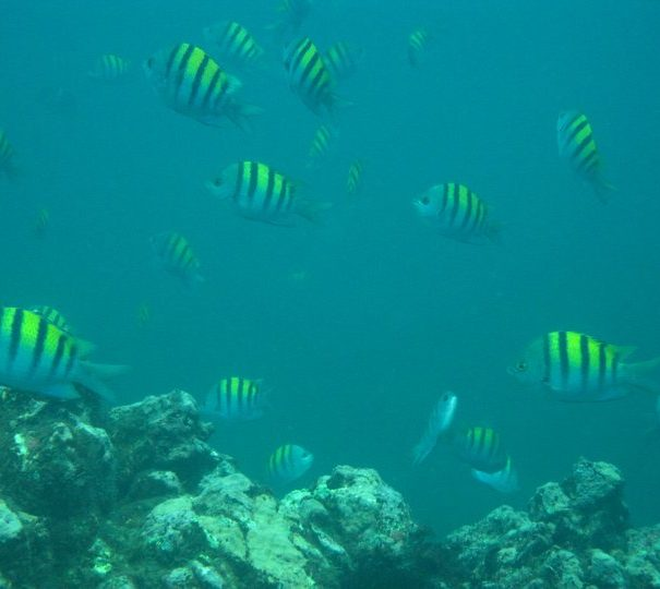 cano-sland-snorkeling-cr-dive-and-surf-3
