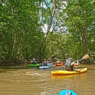 Damas Island Mangrove