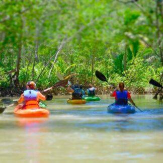 Damas Mangrove With Mile